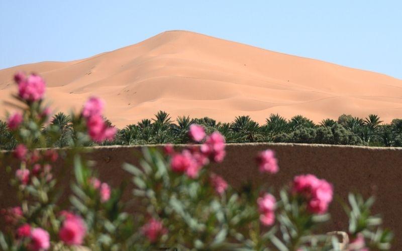 Erg Chebbi Dunes in the 7 Days desert tour from Marrakech